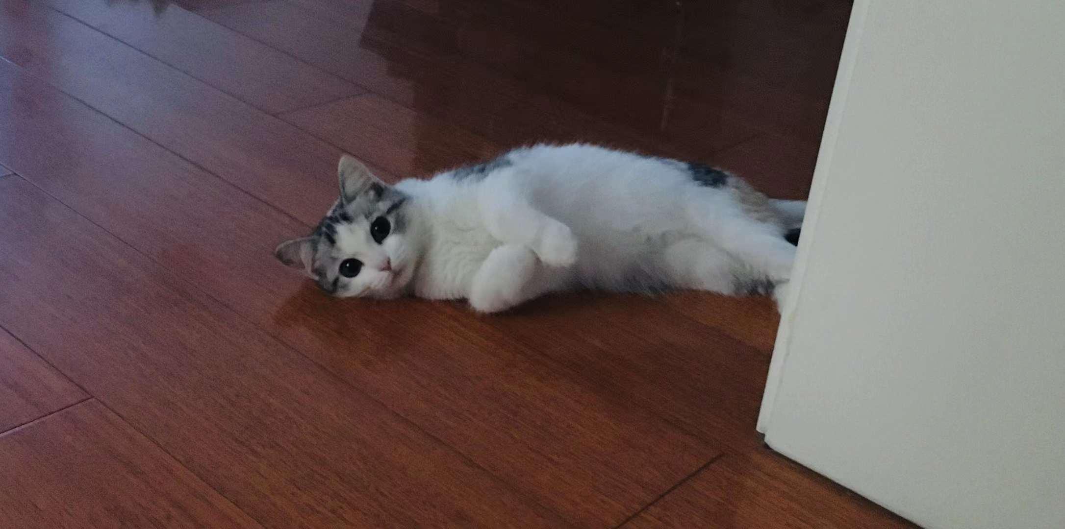 同事养的猫,bb